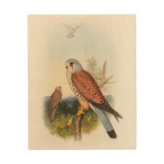 イギリスのKestrelの《鳥》ハヤブサのジョンGouldの鳥 ウッドウォールアート