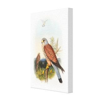 イギリスのKestrelの《鳥》ハヤブサのジョンGouldの鳥 キャンバスプリント
