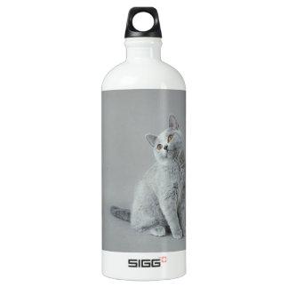 イギリスのshorthairの子ネコ ウォーターボトル