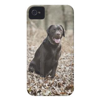 イギリス、イギリスのサフォーク、黒いThetfordの森林 Case-Mate iPhone 4 ケース