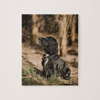 イギリス、イギリスのサフォーク、Thetfordの森林、スパニエル犬 ジグソーパズル