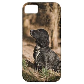 イギリス、イギリスのサフォーク、Thetfordの森林、スパニエル犬 iPhone 5 Case
