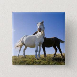 イギリス、ウェールズ、BreconはNPに標識を設置します。 野生の子馬 5.1cm 正方形バッジ