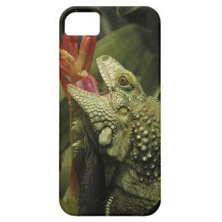 イグアナの西ケープ州の地域、南アフリカ共和国 iPhone SE/5/5s ケース