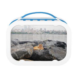 イスタンブールの猫および眺めのお弁当箱 ランチボックス