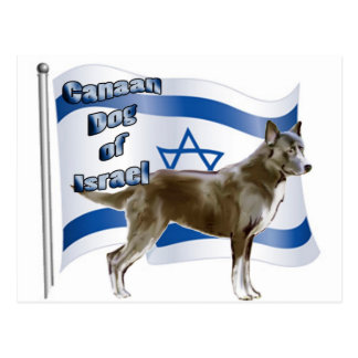 イスラエル共和国のCanaan犬 ポストカード