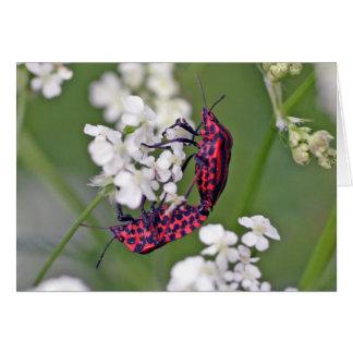 イタリアンなストライプの虫または吟遊詩人の虫 カード
