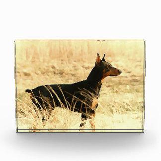 イメージを絵を描いている乾燥したリードのドーベルマン犬 表彰盾