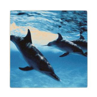 イルカのトリオ ウッドコースター