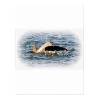 イルカの尾 ポストカード