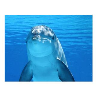 イルカ ポストカード