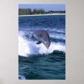 イルカ、壮大なBahama跳んでいる、バハマは ポスター