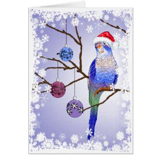 インコのクリスマス カード