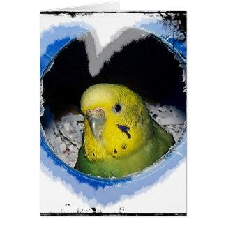 インコの鳥のハートの挨拶状 カード
