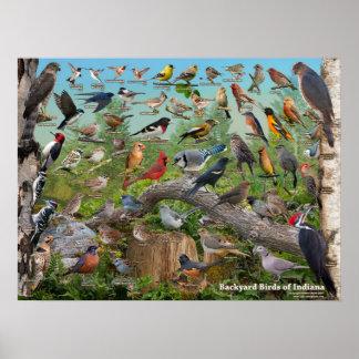 インディアナの裏庭の鳥 ポスター