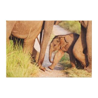 インドのアジアゾウの若者1 キャンバスプリント
