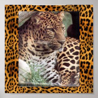 インドのヒョウ ポスター