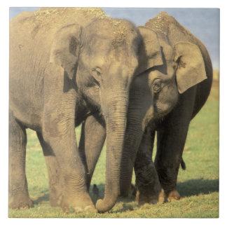 インドのNagarholeの国立公園。 アジアゾウ タイル