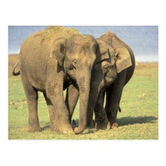 インドのNagarholeの国立公園。 アジアゾウ ポストカード