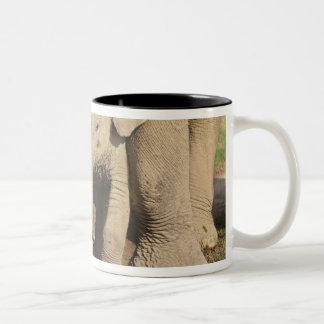 インドゾウの子牛、Corbettの国立公園、 ツートーンマグカップ