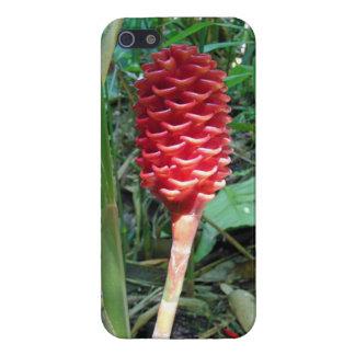 インドネシアのワックスのショウガ iPhone 5 COVER