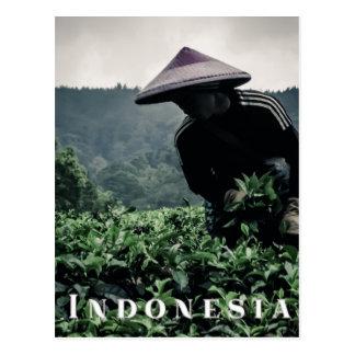 インドネシアの茶外勤、旅行郵便はがき ポストカード