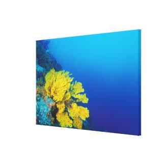 インドネシアのBandaの島、多産の珊瑚礁 キャンバスプリント