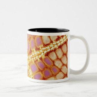 インドネシア。 ヒトデの口、細部 ツートーンマグカップ