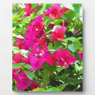 インド旅行花のブーゲンビリアの花柄の紋章 フォトプラーク