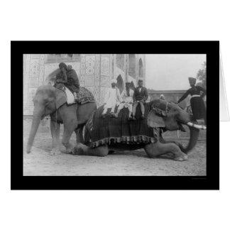 インド1903年の象によって走行している人 カード