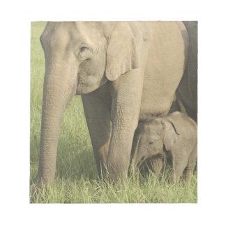 インド/アジアゾウおよび若者1、Corbett ノートパッド