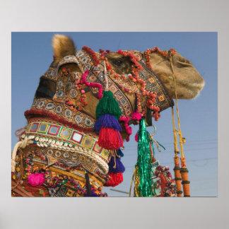 インド、ラージャスターン州、Pushkar: 公平なPUSHKARのラクダ ポスター