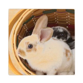 イースターバスケットの若いレックスのウサギ ウッドコースター