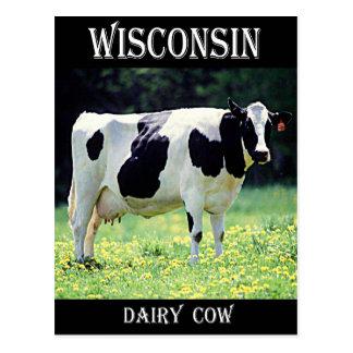 ウィスコンシンの乳牛 ポストカード