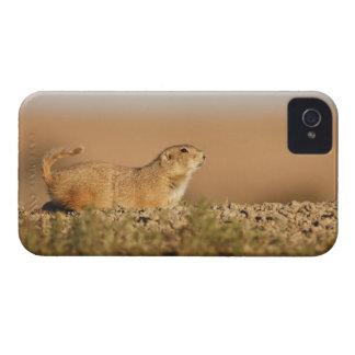 ウィチタ山の国民の野生生物の保護区、 Case-Mate iPhone 4 ケース