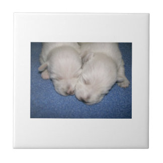 ウエスト・ハイランド・ホワイト・テリアの子犬のタイル タイル