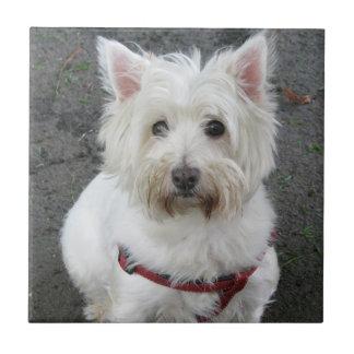 ウエスト・ハイランド・ホワイト・テリア犬のタイルかtrivet タイル