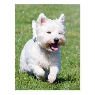 ウエスト・ハイランド・ホワイト・テリア、westie犬のかわいい写真 ポストカード