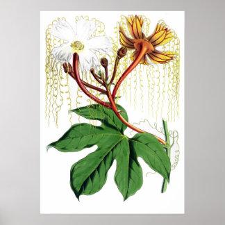 ウォルターフードFitch - Hodgsoniaのheteroclita ポスター