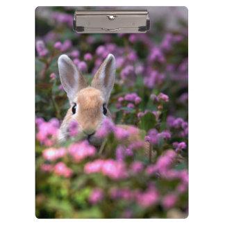 ウサギの農場 クリップボード