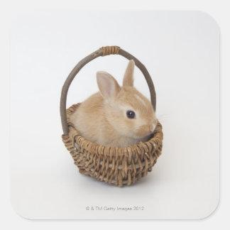 ウサギはバスケットにあります。Netherlandの小びと スクエアシール