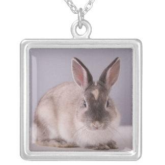 ウサギ、シンプルな背景、動物、白いテーブル、 シルバープレートネックレス