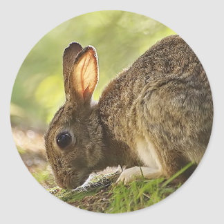 ウサギ 丸形シール・ステッカー