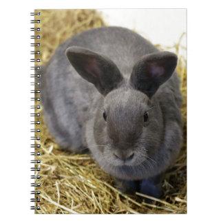ウサギ ノートブック