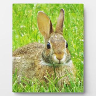 ウサギ フォトプラーク