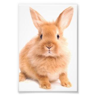 ウサギ フォトプリント