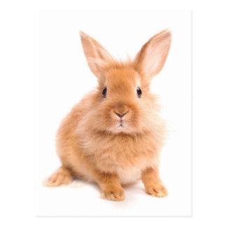 ウサギ ポストカード