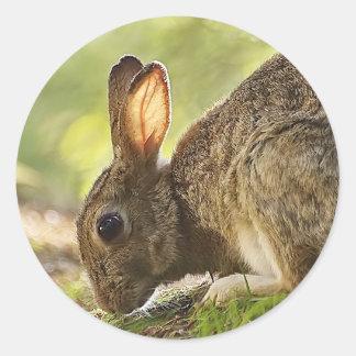 ウサギ ラウンドシール
