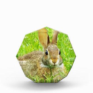 ウサギ 表彰盾