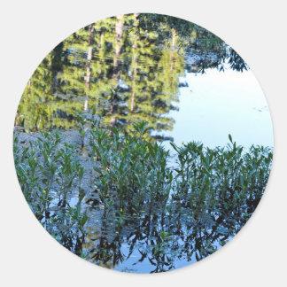 ウシガエルの池の反射 ラウンドシール